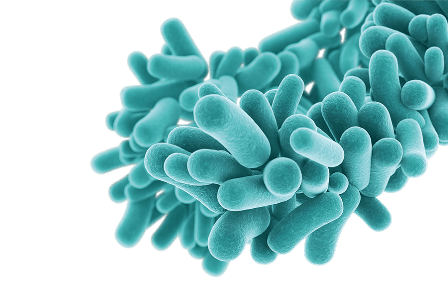 Cepas probióticas - DermaveelPro - HeelProbiotics - Heel España