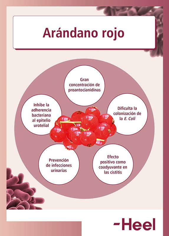 Arándanos rojos para la cistitis - HeelProbiotics - HeelEspaña
