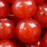 ¿Ayudan los arándanos rojos a prevenir las cistitis? - HeelProbiotics - HeelEspaña