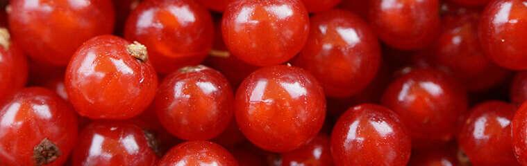 Arándanos Rojos en la Prevención de ITUs