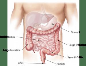 Sobrecremiento bacteriano. Diagnóstico - HeelProbiotics - HeelEspaña