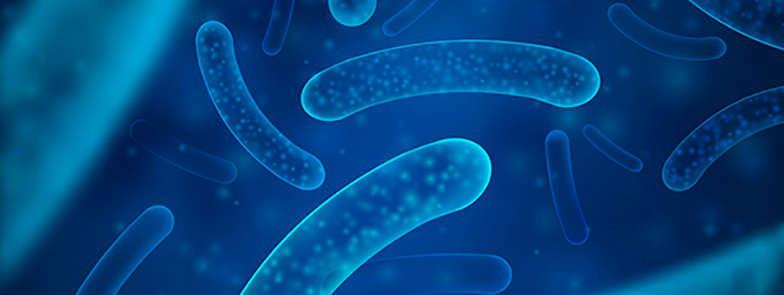 Probióticos y piel: estrecha relación - HeelProbiotics - HeelEspaña