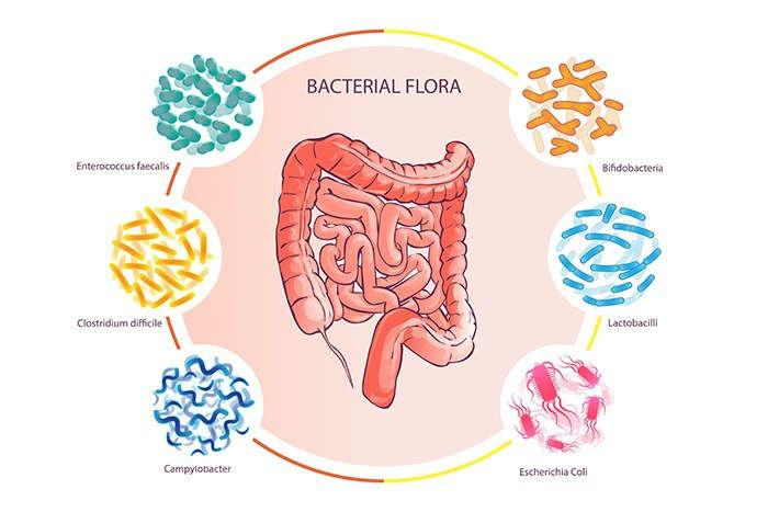 Cómo prevenir los desajustes de la microbiota - HeelEspaña