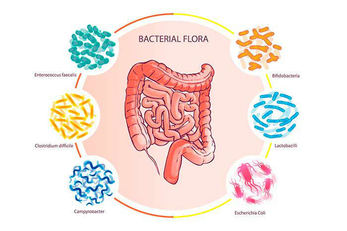 Importancia de restaurar la microbiota - HeelEspaña