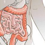 Restauración del microbioma