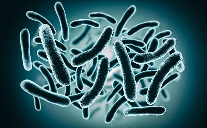 Microorganismos de la microbiota intestinal - HeelEspaña