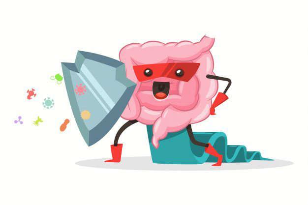 Salud intestinal | Consecuencias en la cuarentena: salud intestinal inmnidad - HeelEspaña