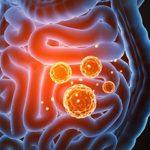 El papel de la barrera intestinal en la inmunidad