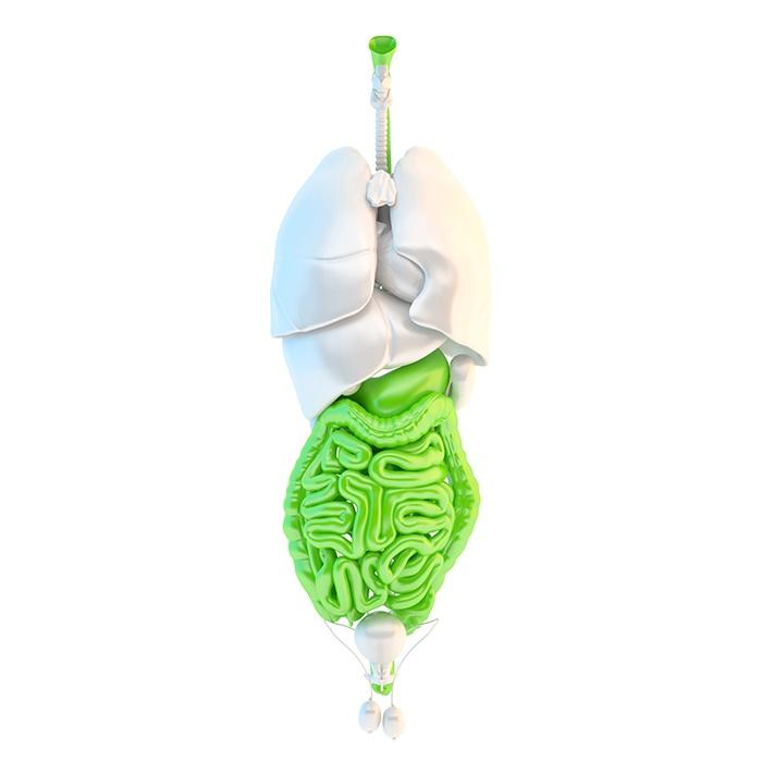 Factores que influyen en la microbiota y obesidad
