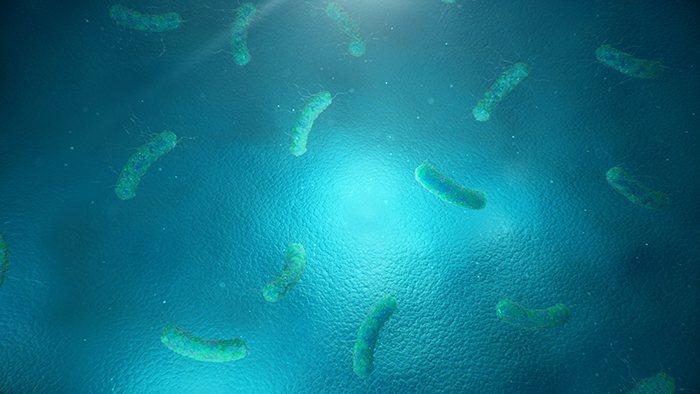 Papel de las bifidobacterias y lactobacilos
