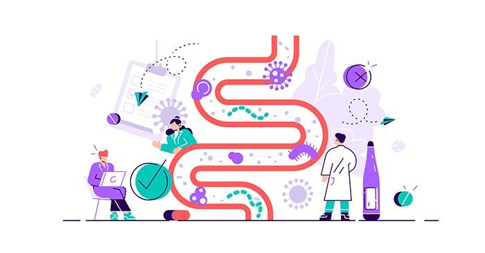 Bacterias del intestino: bifidobacterias y lactobacilos